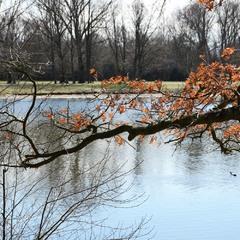 Цветная полоска или Весенние остатки осени
