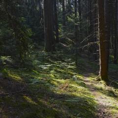 Лесной тропинкой
