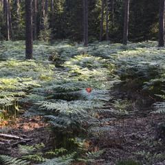 В лесу на Ивана Купала