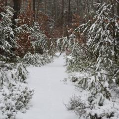 Зимними дорожками