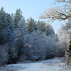 Зима, денёк, снежок, уголок