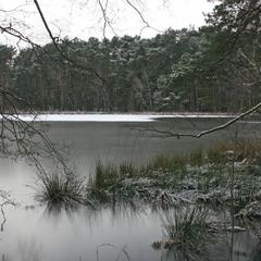 Пейзаж с ветками