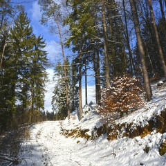 В приятную зимнюю погоду