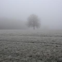 Контуры в тумане