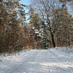 Погожим зимним деньком