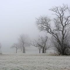 О зимних садах