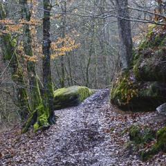 Осенняя зима или зимняя осень