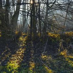 Лесной осенний сюжет