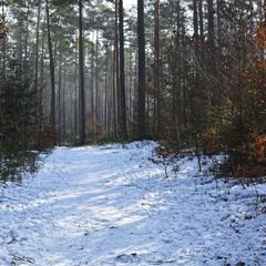 Осенне-зимний пейзажик