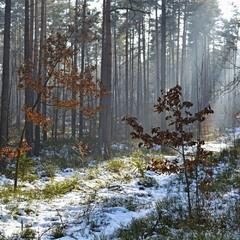 То ли осень, то ли зима 2
