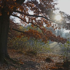 Осень в наступлении