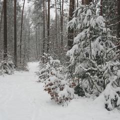 Опять зима на белом свете