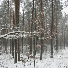 Таки пришла зима...