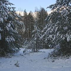 В зимнем предвечернем лесу