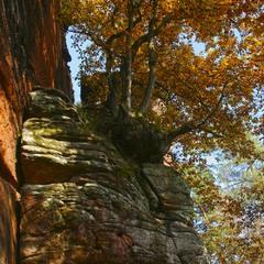 О деревьях, на камнях растущих