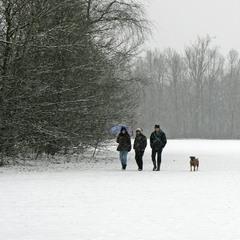 Трое в парке, не считая собаки