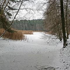 Просто зимний пейзаж