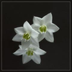 Цветок.