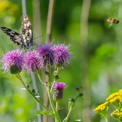 Пчела и Бабочка