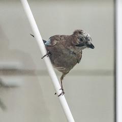 Зазирнула пташка у моє вікно