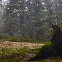 Где-то в лесу