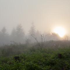 Над лісом сонечко вставало