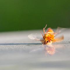 Брейк-данс майского жука