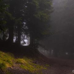 Лісом в туман