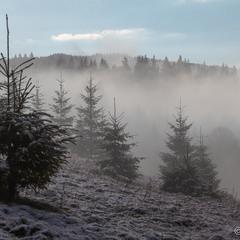 Травневі тумани