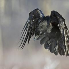 Mістичний птах
