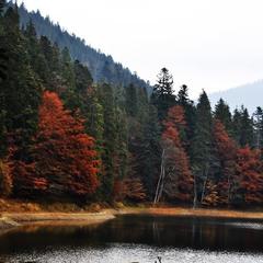 Lake and autumn