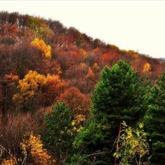 Remembering autumn...