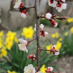 Весны цветение...