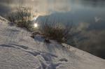 Немного солнца в холодной воде