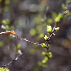 Ноктюрн весне
