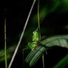 """""""в траве сидел кузнечик, совсем, как человечек, зелёненький он был"""""""