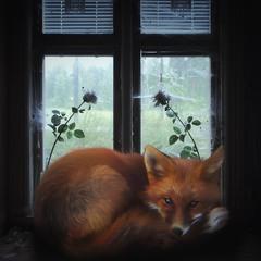 FOXик
