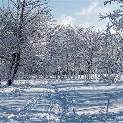 Голубые снеги
