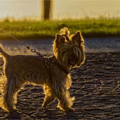 Cолнечный пёс