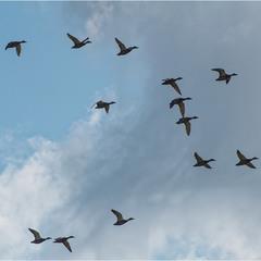 Летят утки...