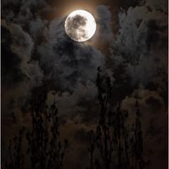 Місяць перелому