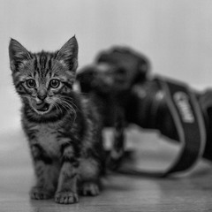 canon and cat
