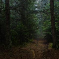 Історії весняного лісу