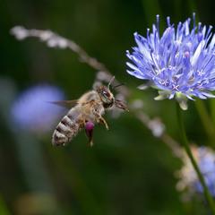 На запах нектара