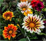 На перспективу цветочного изобилия!)