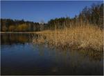 Осенний узор пруда...)