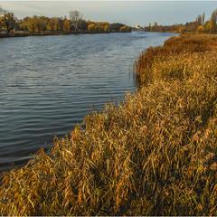 Осенние заросли берегов...)