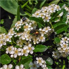 Любители нектара разных видов!)