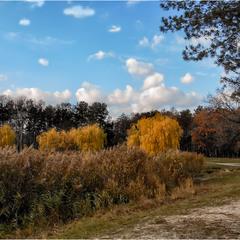Светлый день ноября.