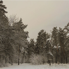 Строгая зимняя панорама...